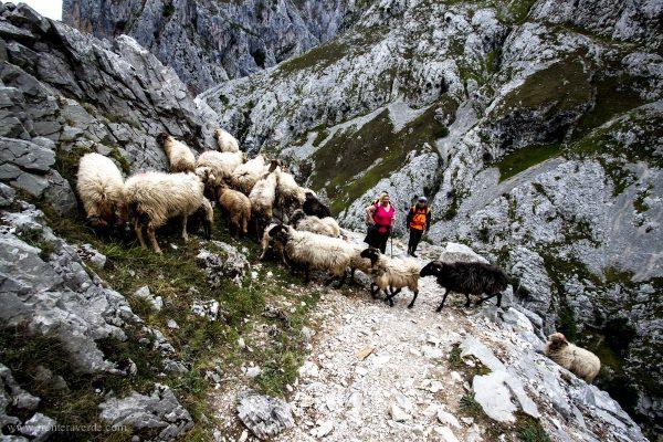 Escapada a los Picos de Europa